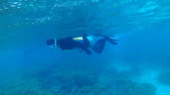 お母さんはじっくり眺めながら泳いでいます。