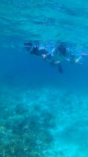 ゆったり泳いでたのしんでいるお父さんとお母さんです。