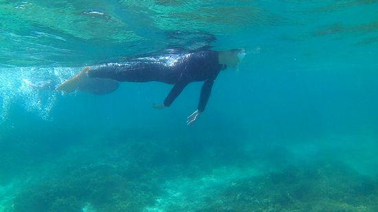せわしく泳ぎまわるU田さんです。