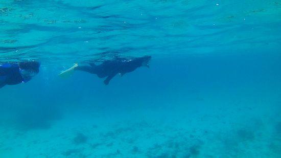 自由に泳ぎ回るM井さん