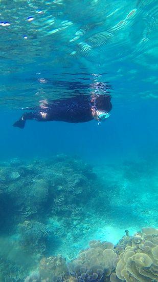 黙々と泳ぎ回っています。