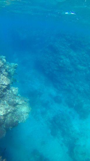 水底15m、透明度抜群です
