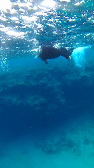 深場も泳ぎ回っています。