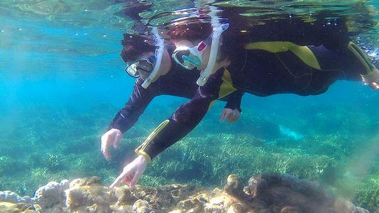 ハマサンゴの上にはいろんな生き物です♪