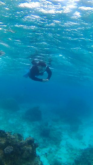 自由に泳ぎまわるお父さん