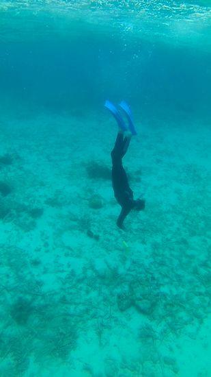 シャープな泳ぎのハルカ君