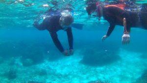 2月のさんご礁の海からはゆったりのんびりです。