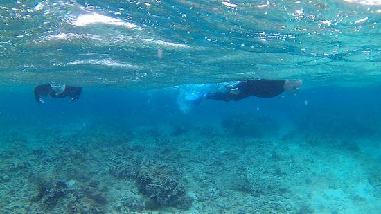 おじちゃん、おばあちゃん、無敵の泳ぎです