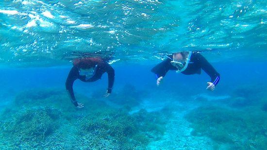 ご夫婦そろって、ゆったり泳いでいます。