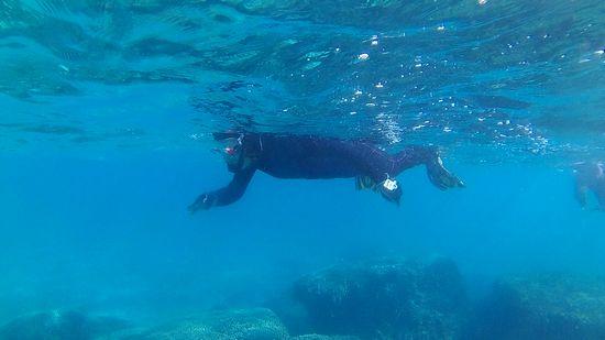 すいすい泳ぐM井さん