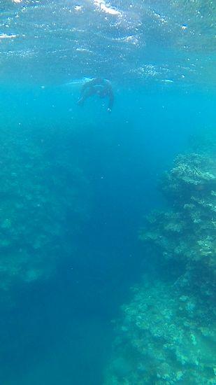 水深20mの断崖絶壁を楽しんだり