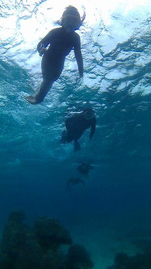 きれいに並んで泳いでいます。
