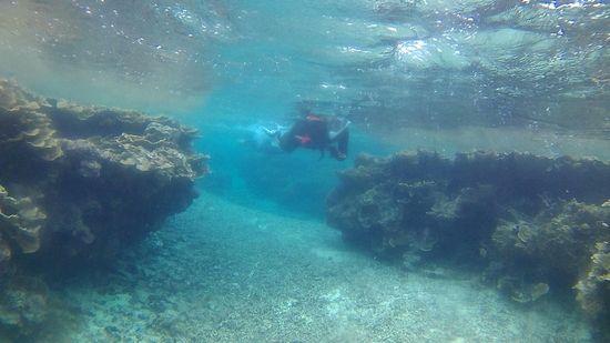 干潮時間のマイタケサンゴ