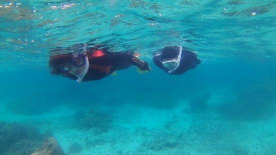 すいすい泳ぎ始めていきます。