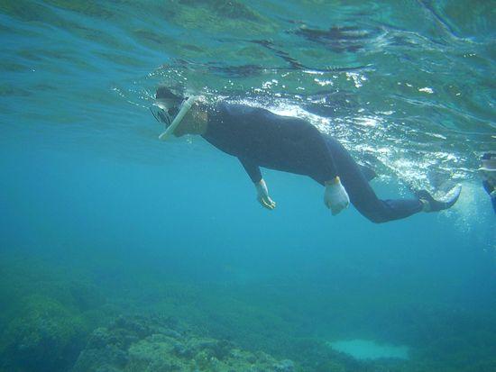 旦那さん、フットワーク軽く泳いでいます。