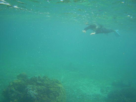 お父さんもゆったり泳ぎ回っています。