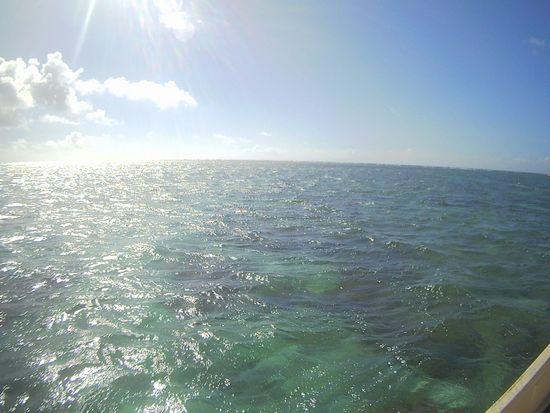 朝から陽射しの強い石垣島です。