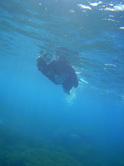 マイペースに泳ぐT木さん
