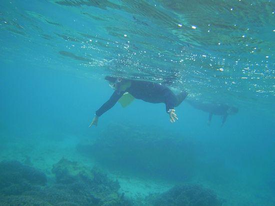 お母さん、この波でも余裕の泳ぎです。