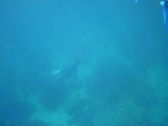 水底を漂うhさん