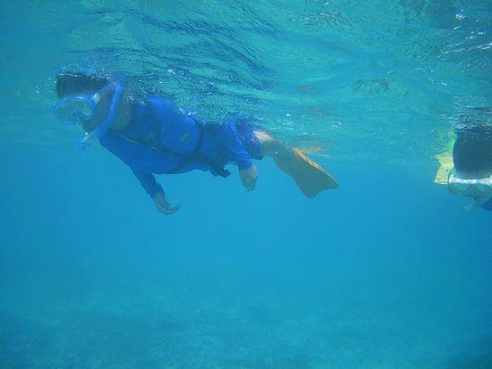 シュウセイ君、軽やかに泳ぎ回っています。