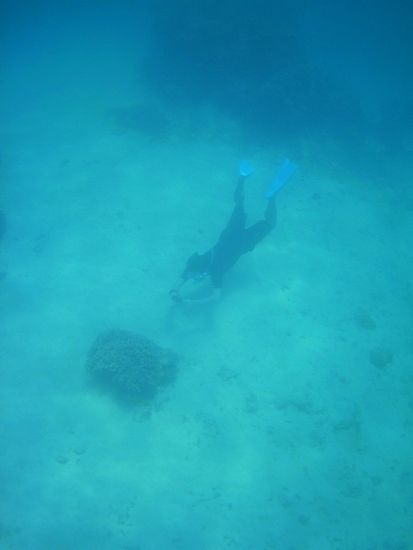 旦那さんは、水底を這うように潜っています。