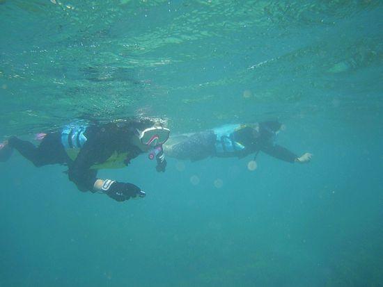 荒波でもぐいぐい泳ぎます。