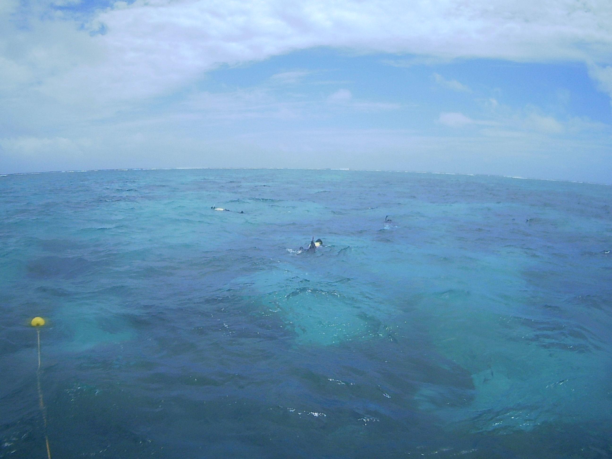 フリータイムも、もくもくと泳ぎ回っていました