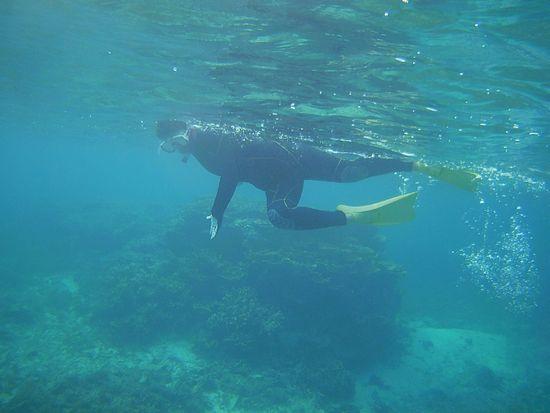 すいすい泳ぐT田さん