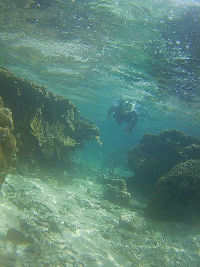 干潮時間はサンゴはすぐそこです