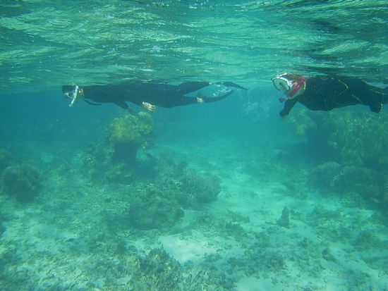 お父さんとお母さんも石垣島の海をシュノーケリング