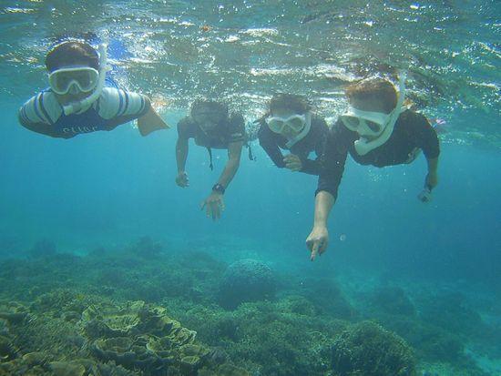 サンゴ増えると、