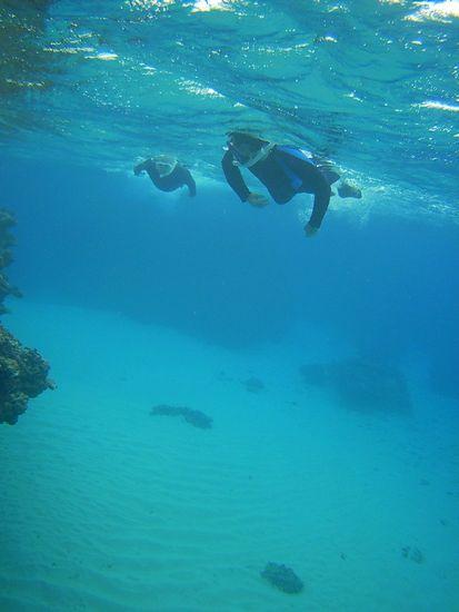 深場の真っ白な砂地を泳いでいきます。
