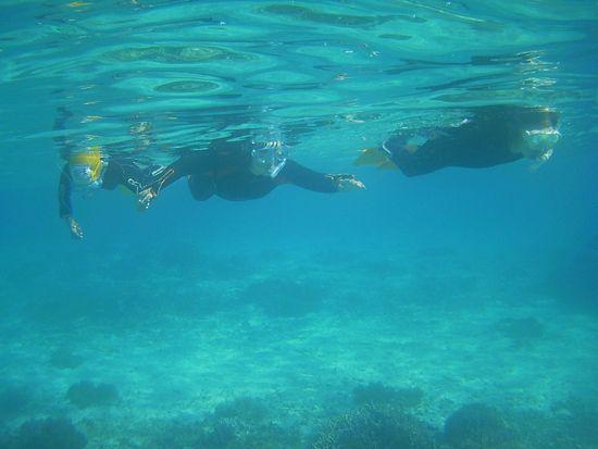 三人そろって泳ぎ回っていましたね!