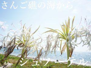 石垣島に到着しました。