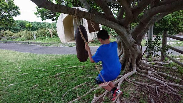 公民館の木で