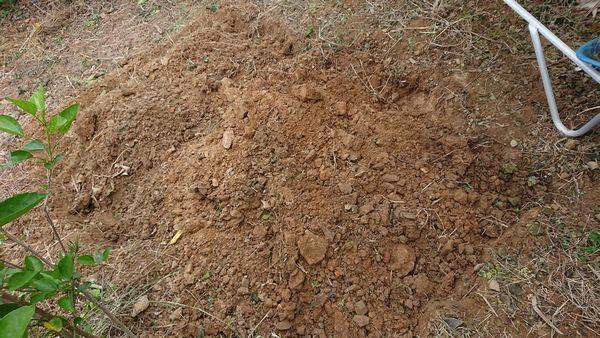 少しずつ耕して、石を取り除いていきます。