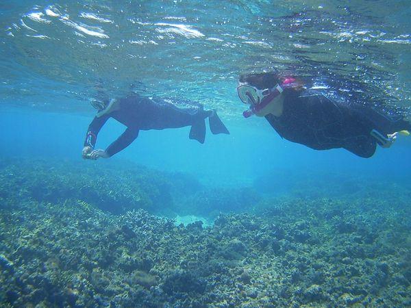 二人そろって泳いでいます