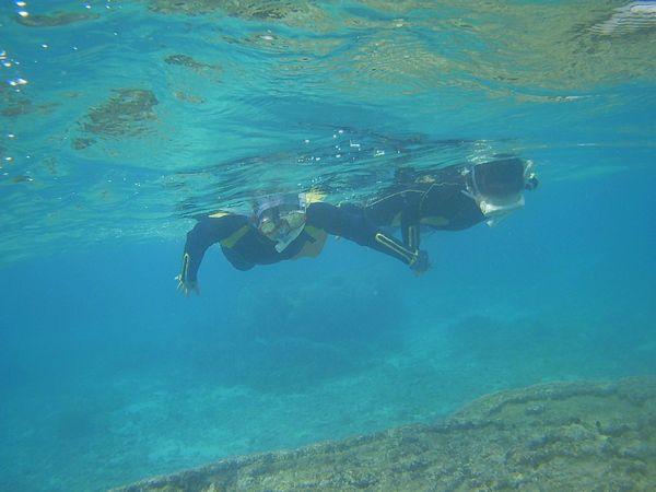 おかあさんといっしょに泳いでいます