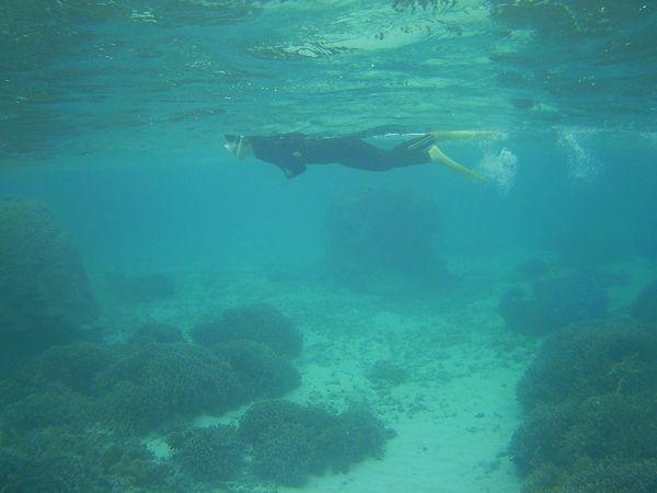 お母さん、軽やかに泳ぎ回っています。