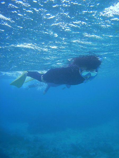 もうすっかりベテランの泳ぎです