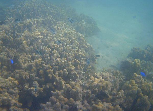 サンゴが案外あるんですよね