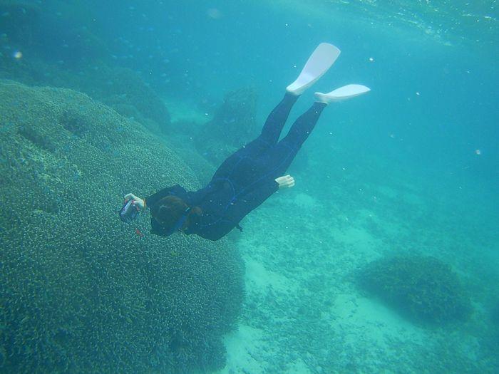 サンゴヘリをすーいすい泳ぐN島さん