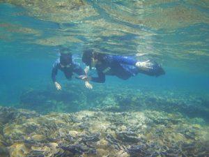 石垣島の海でシュノーケル de ブルーチャージ!