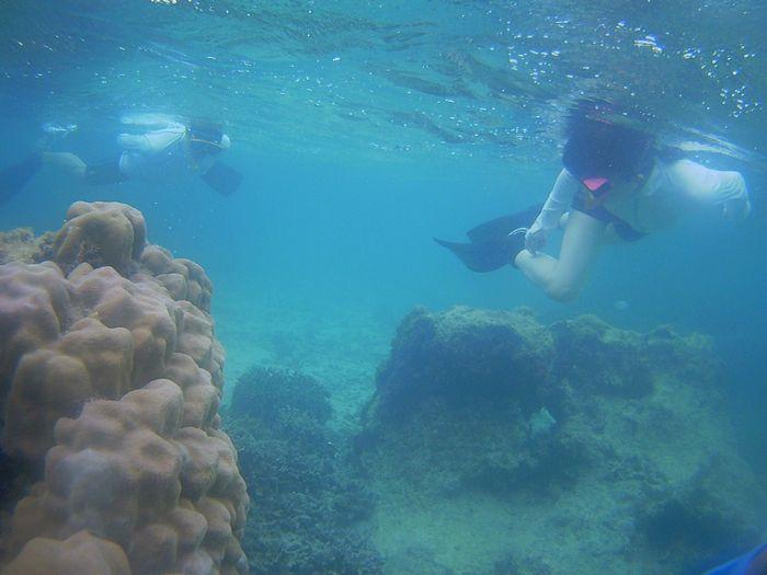 水中世界を楽しでいます。
