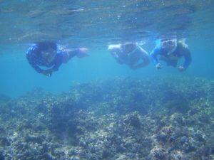 前日予約の皆さん、石垣島の海を満喫シュノーケル