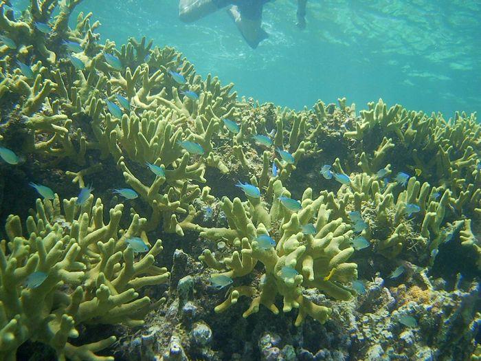 水中世界は変わらず華やかです♪