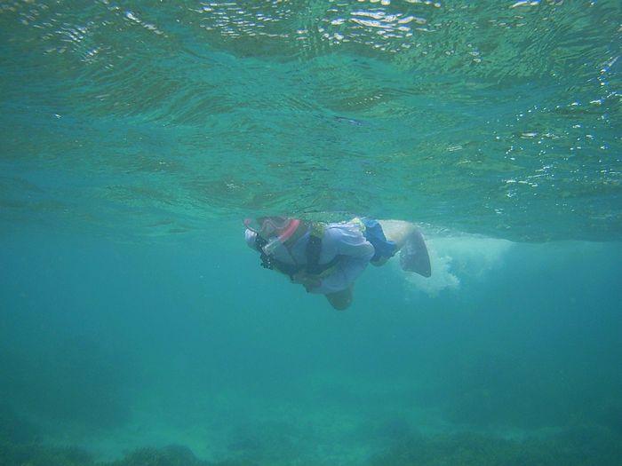 シホちゃん、パワフルな泳ぎです