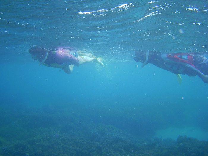 お母さん石垣島のサンゴを満喫