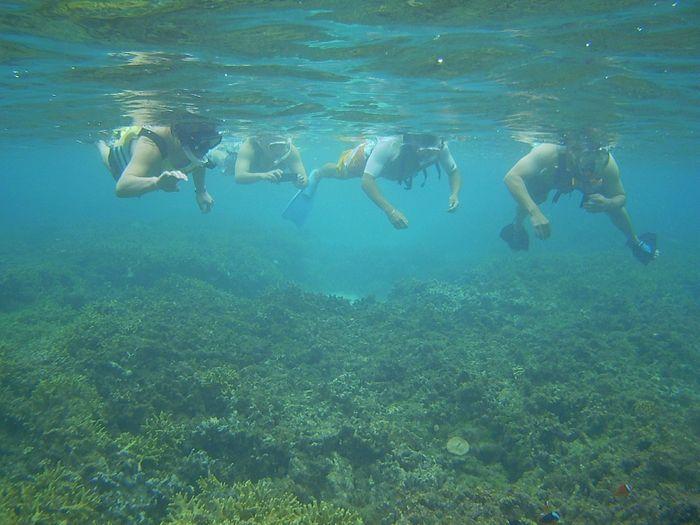 サンゴを満喫ツアー